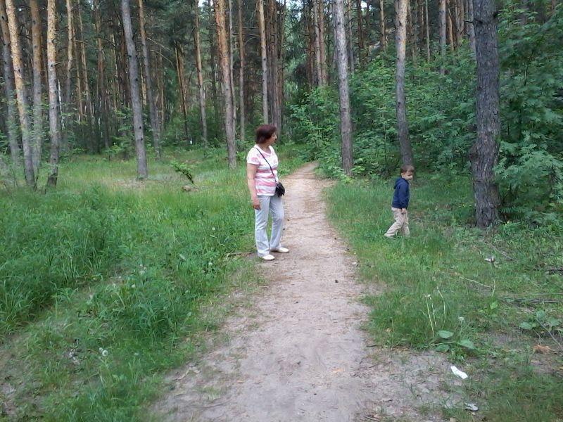 Северный лес в Воронеже обещают благоустроить к лету 2023-го